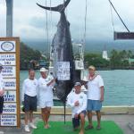 560 lb Blue Marlin Kona Fishing