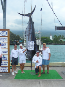 560 lb Blue Marlin Kona Fishing