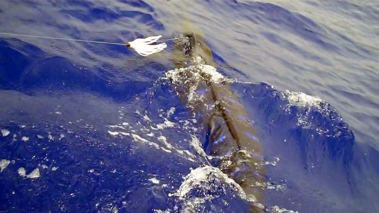 Marlin fishing in kona for Kona hawaii fishing
