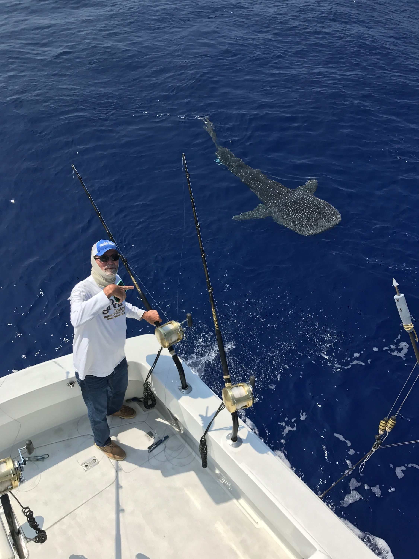 Shark fishing in hawaii best fish 2017 for Kona deep sea fishing